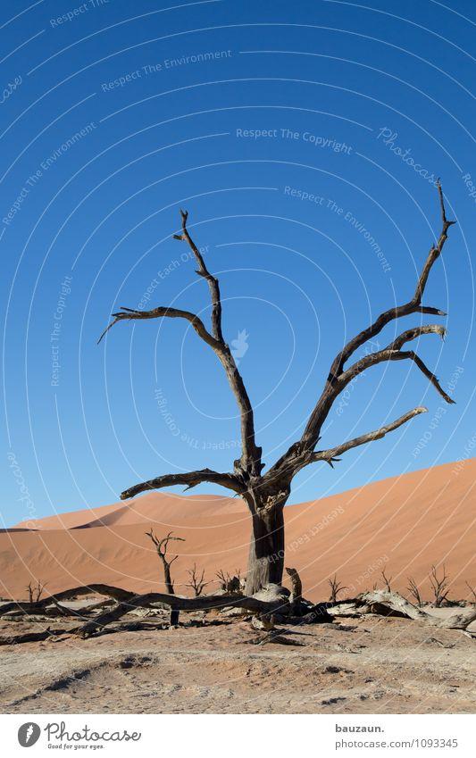 friedhof. Himmel Natur Ferien & Urlaub & Reisen Pflanze Sommer Sonne Baum Landschaft Ferne Umwelt Freiheit Wetter Wachstum Tourismus Klima Vergänglichkeit