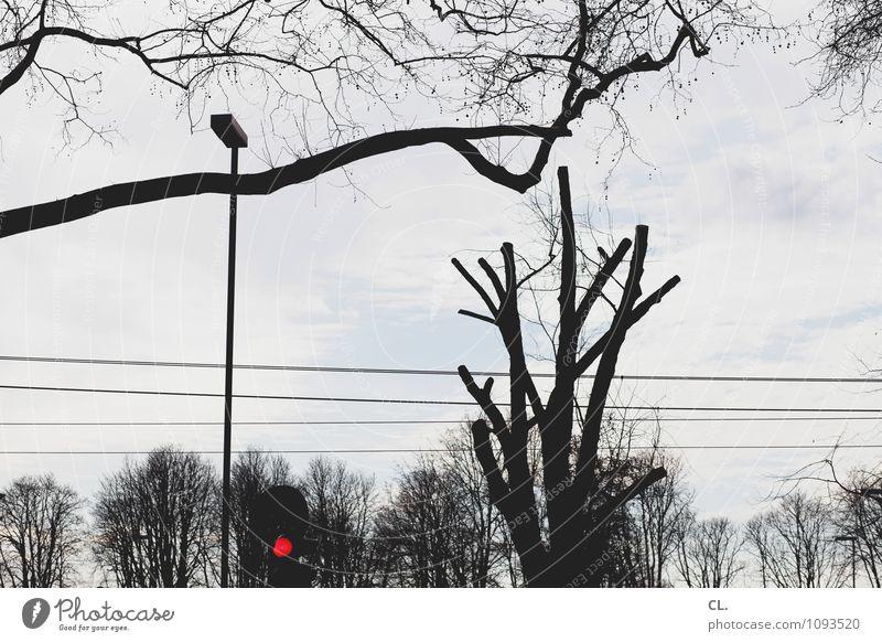 guck in die luft Umwelt Natur Himmel Wolken Herbst Winter Baum Verkehr Verkehrswege Straßenverkehr Ampel Straßenbeleuchtung warten rot Pause stagnierend Stadt