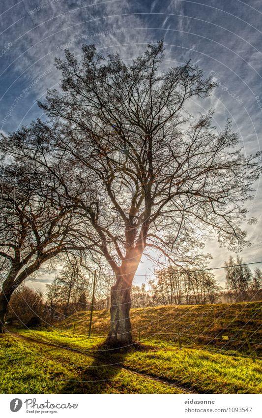 Baum im Gegenlicht Natur Landschaft Pflanze Himmel Wolken Sonne Sonnenlicht Winter Schönes Wetter Zufriedenheit achtsam Vorsicht Gelassenheit ruhig HDR