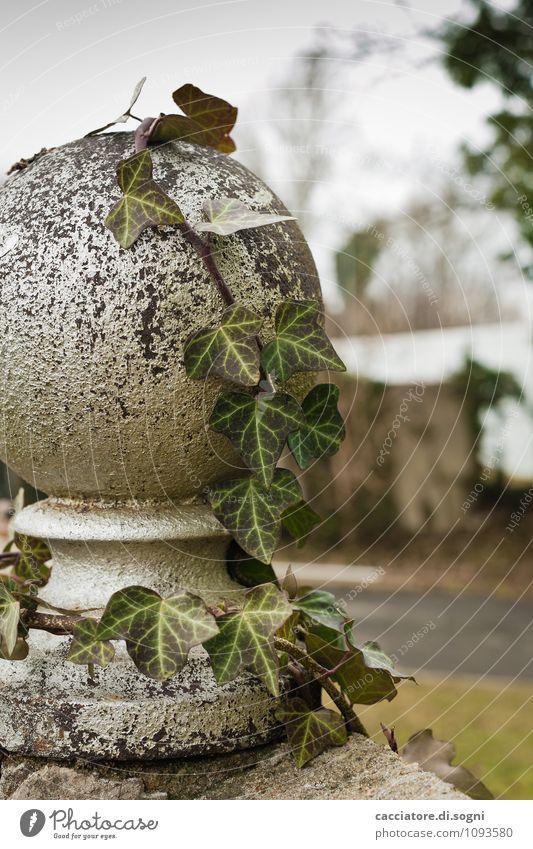 Efeu Umwelt Herbst Winter Pflanze Grünpflanze Wildpflanze Park Mauer Wand Kugel Wachstum dunkel einfach natürlich trist grau grün bescheiden demütig Traurigkeit