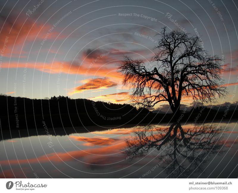 Morgenstimmung Sonnenaufgang Baum See Wolken Wasserspiegelung Himmel Morgendämmerung Landschaft