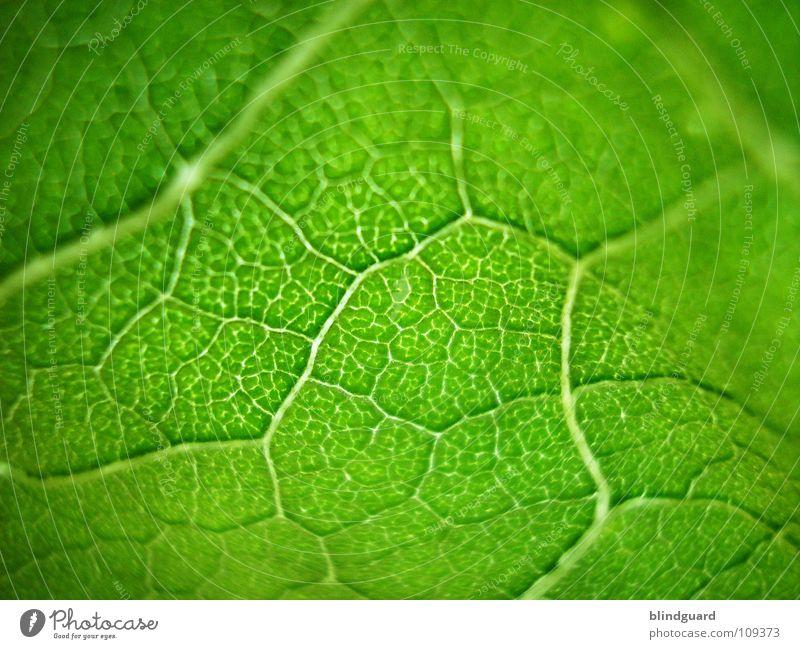 Knallgrün ;o) Pflanze Sommer Blatt Lampe Leben oben Garten Wärme klein Lebensmittel hoch frisch Perspektive Wachstum Physik
