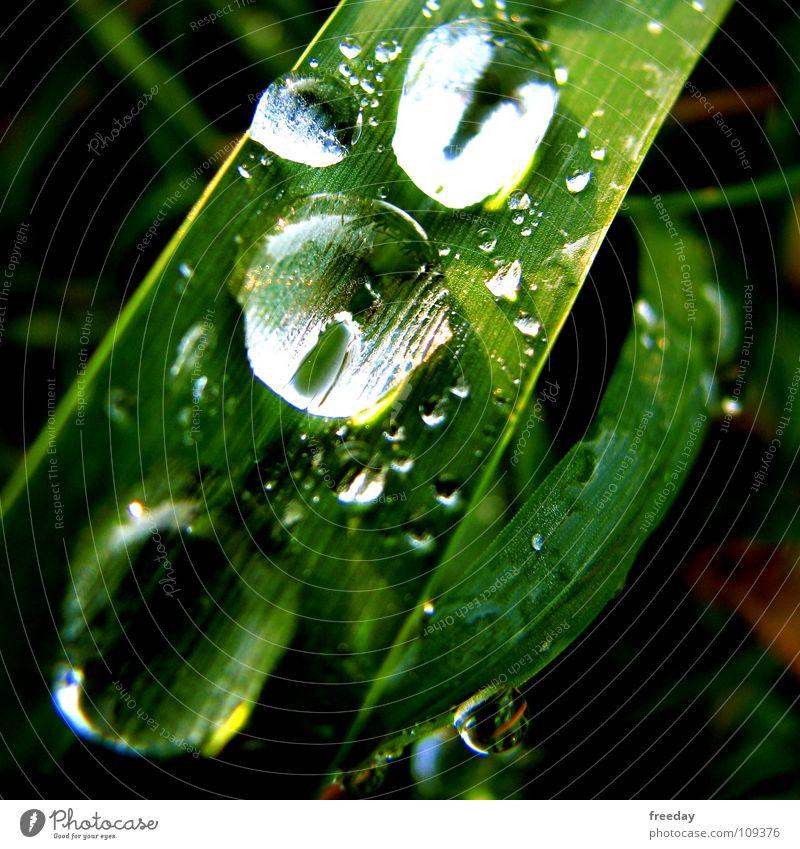 ::: Rain down on me 2 ::: Natur Pflanze grün Sommer Wasser Blatt Umwelt Leben Gras Hintergrundbild Regen Kraft verrückt Wassertropfen nass rund
