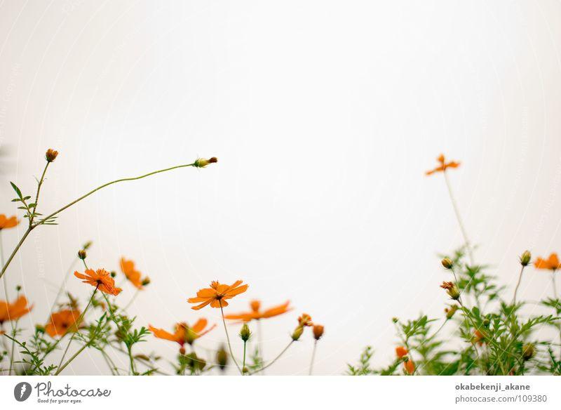white / orange orange Schmuckkörbchen