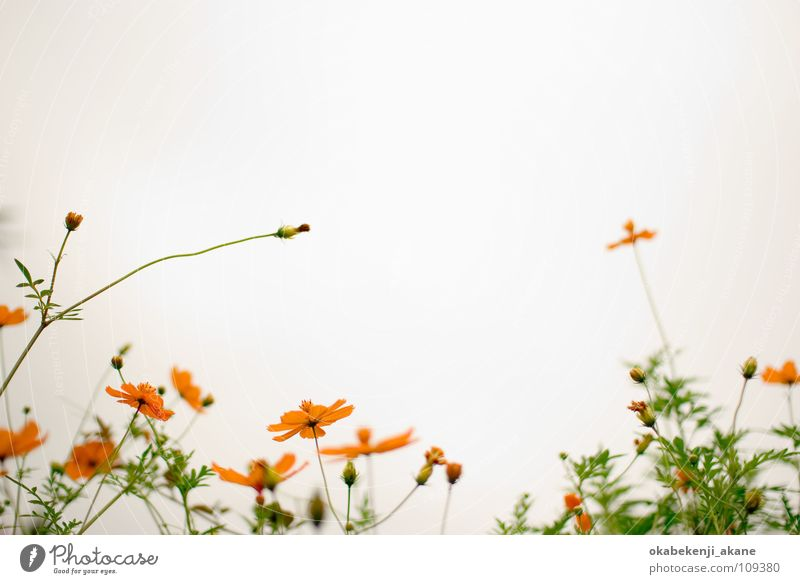 white / orange Schmuckkörbchen