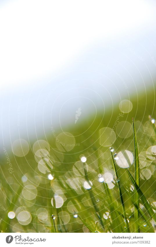 lights Licht white blue sunny grass dance atmosphere air morning