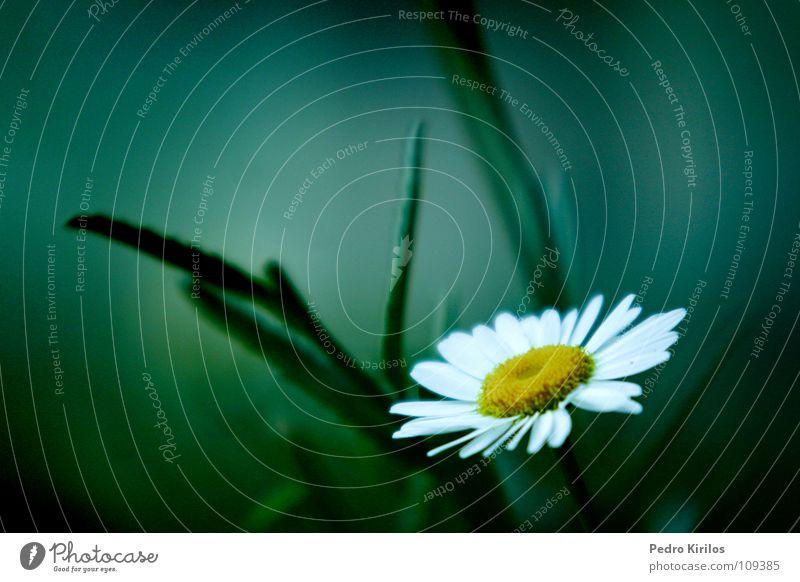 eden Garten Park pedrokirilos flor jardim qarden flower pk luz sombra black