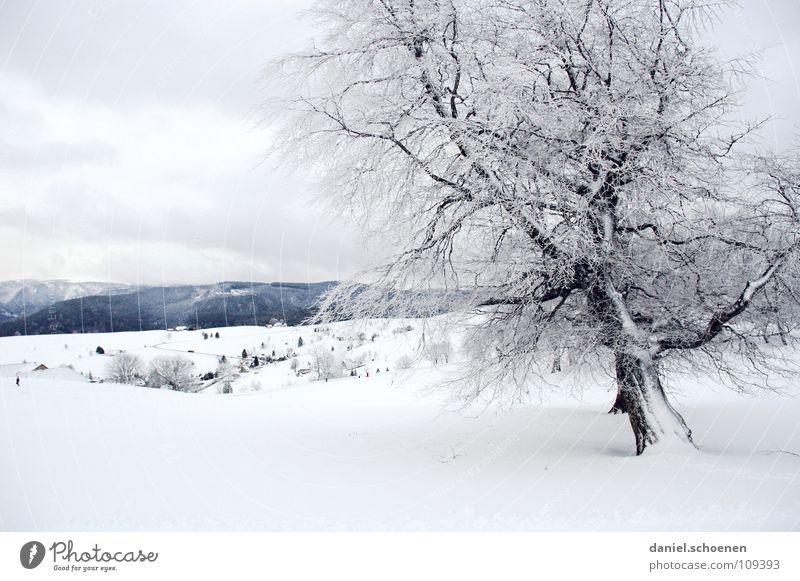Weihnachtskarte 9 Himmel Natur blau weiß Baum Ferien & Urlaub & Reisen Winter Einsamkeit kalt Schnee Horizont Deutschland Hintergrundbild Nebel Freizeit & Hobby