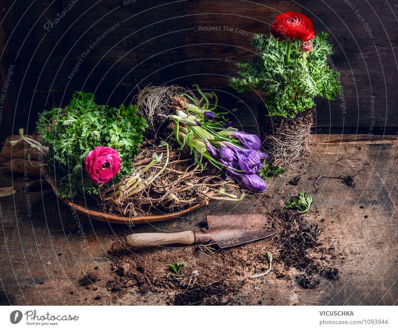 Frühlingsblumen pflanzen Lifestyle Stil Design Garten Dekoration & Verzierung Tisch Natur Pflanze Sommer Blume Duft flowers Krokusse Ranunkel Schaufel