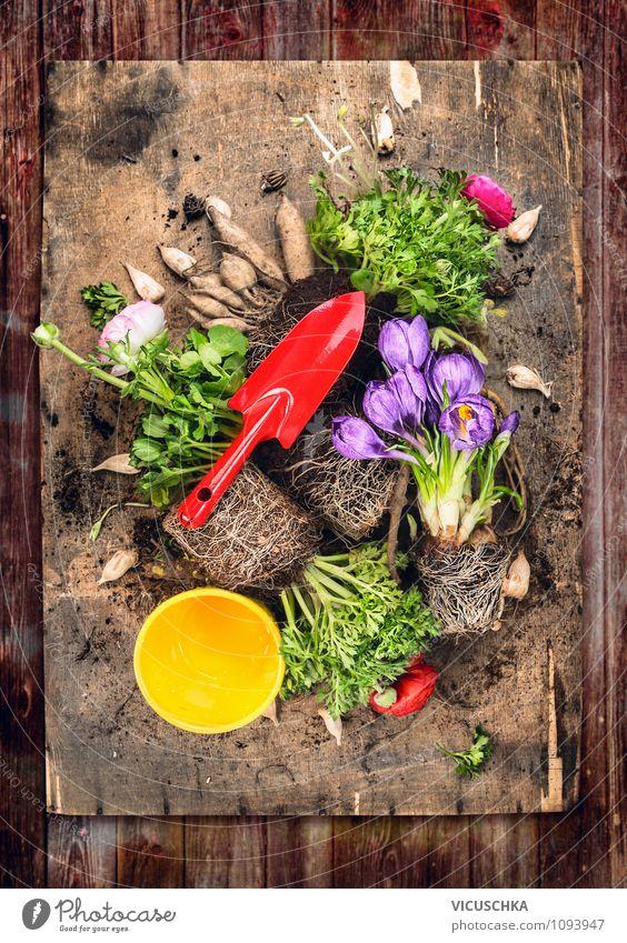 Frühlingsblumen pflanzen, Composing auf Holztisch Natur alt Pflanze Sommer Blume rot Freude Stil Garten Lifestyle Freizeit & Hobby Design Erde