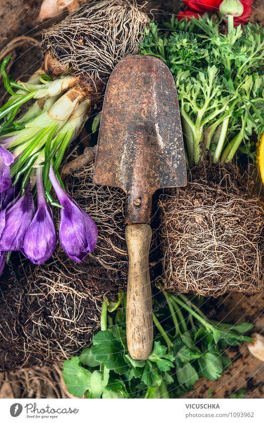 Alte Schaufel und Topfblumen Natur Pflanze schön Sommer Blume Herbst Frühling natürlich Stil Hintergrundbild Garten Lifestyle Freizeit & Hobby Design