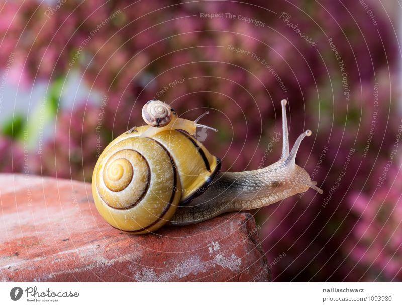 Gebänderte Schnirkelschnecke Körper Haus Garten Tier krabbeln außergewöhnlich groß klein nah schleimig Geborgenheit Hilfsbereitschaft Vertrauen Zusammenhalt