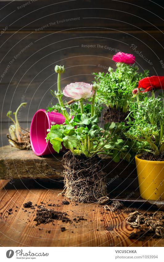 Blumen umtopfen Natur Pflanze Freude Farbstoff Blüte Innenarchitektur Stil Garten Lifestyle Freizeit & Hobby Design Dekoration & Verzierung elegant Erde Tisch