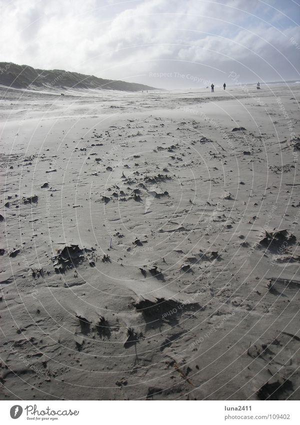 Sandsturm Teil 2 Strand Sturm Meer Küste Wolken Gegenlicht Leidenschaft Himmel Erde Wind Stranddüne Berge u. Gebirge Wasser Nordsee Spaziergang Stein Spitze