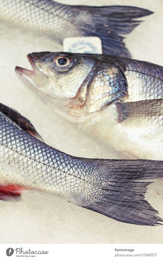 friiische Fiiiische blau Meer Tier grau liegen frisch 3 Kochen & Garen & Backen Fisch Küche lecker mediterran diagonal gefangen Fischereiwirtschaft Fischerboot
