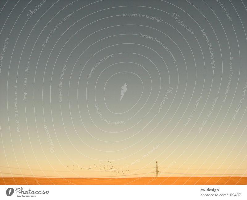 einsam. Vogel Vogelschwarm Zugvogel Strommast Elektrizität elektrisch Physik angenehm Feld Körperhaltung Spaziergang Pendler Luft atmen maskulin wo Gelände