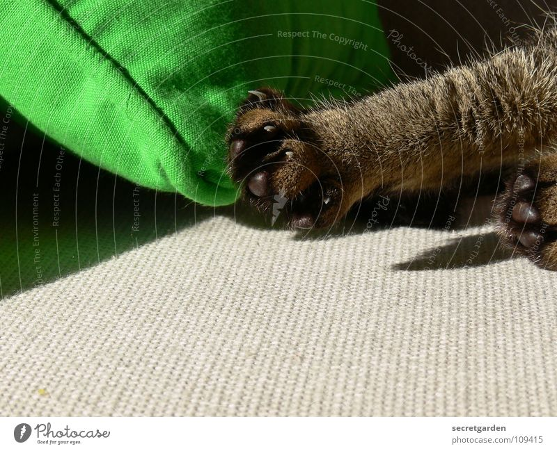 morgengymnastik für krallen grün ruhig Tier Erholung grau Katze Wärme Fernsehen liegen Physik Häusliches Leben Sofa Reinigen Stoff Möbel Wohnzimmer