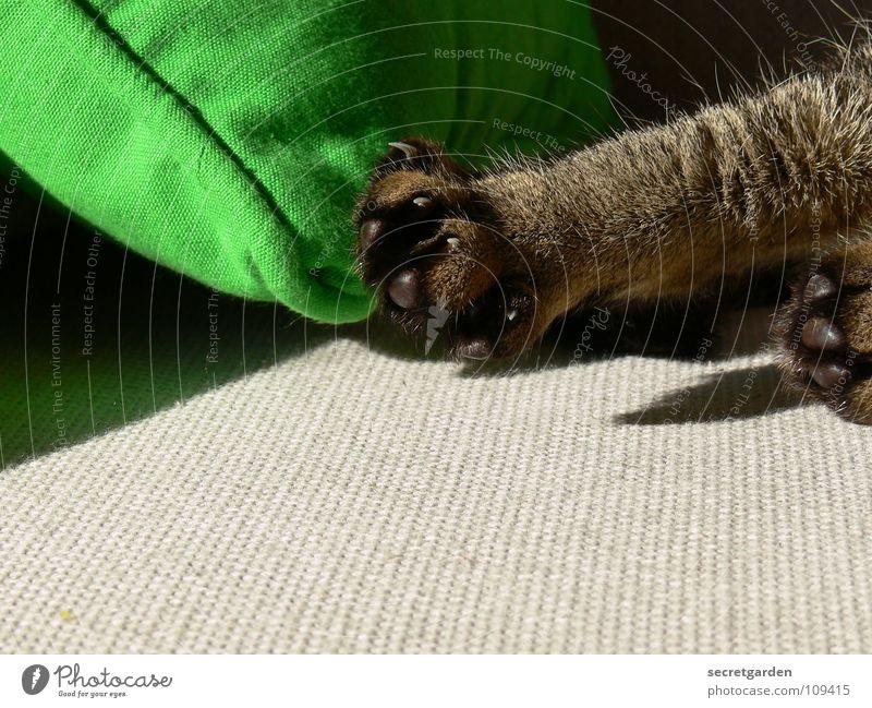 morgengymnastik für krallen Sofa Katze Tier Krallen Katzenpfote Pfote Erholung Reinigen lutschen ausgestreckt hängen gestreift Stoff Physik kuschlig grau