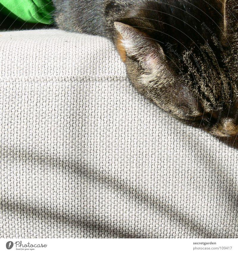 kleiner durchhänger Sofa Katze Tier Erholung ausgestreckt hängen gestreift Stoff Physik kuschlig grau gemütlich lümmeln Fernsehen Material Wohnzimmer Möbel