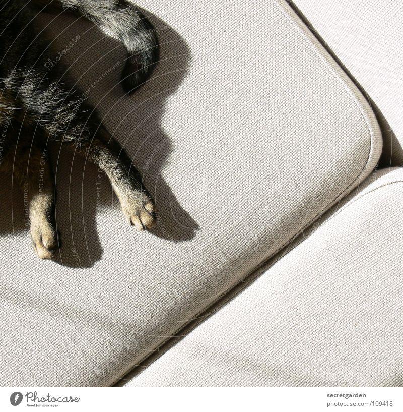 freies eckchen auf dem sofa Sofa Katze Tier Krallen Katzenpfote Pfote Schwanz Erholung ausgestreckt hängen gestreift Stoff Physik kuschlig grau gemütlich