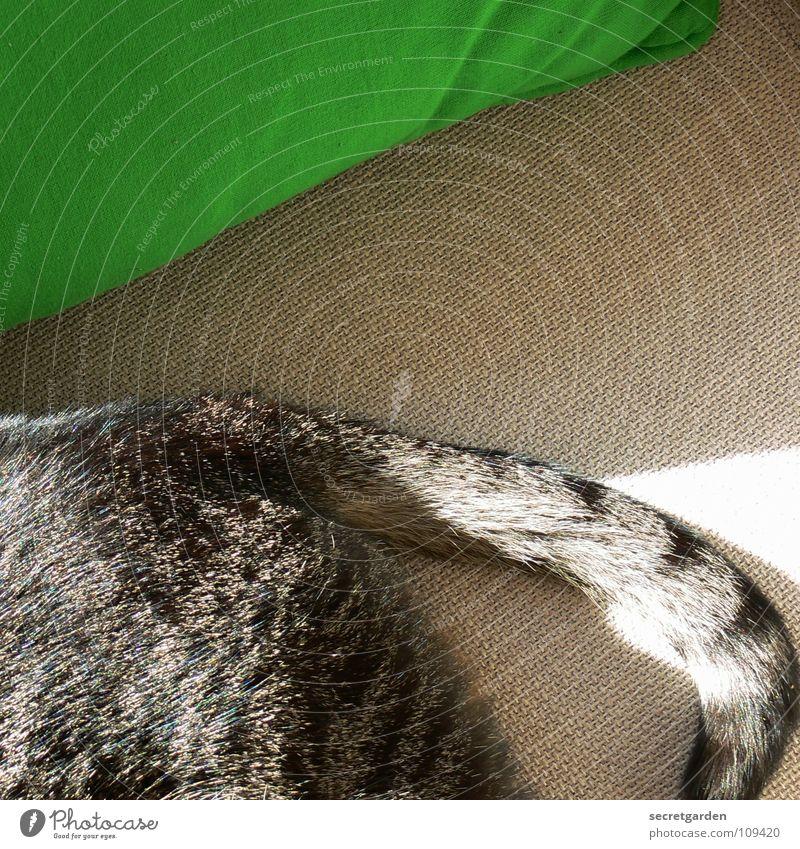 der sonne zugewandt grün ruhig Tier Erholung grau Katze Wärme schlafen Fernsehen liegen Dekoration & Verzierung Physik Häusliches Leben Sofa Stoff Möbel