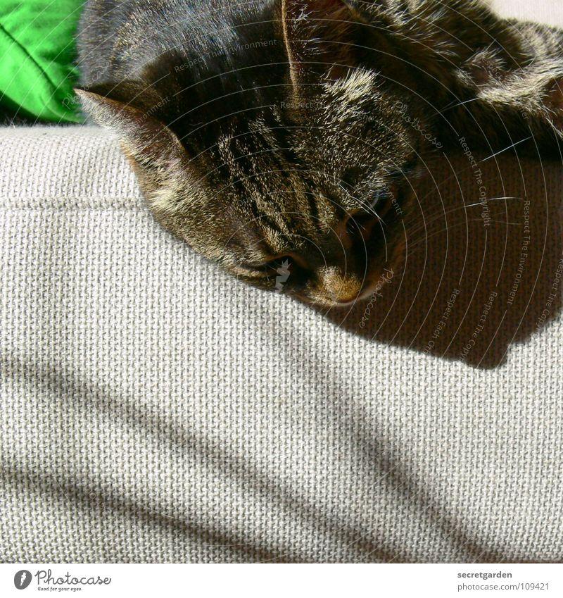 kleiner durchhänger II Sofa Katze Tier Erholung ausgestreckt hängen gestreift Stoff Physik kuschlig grau gemütlich lümmeln Fernsehen Material Wohnzimmer Möbel