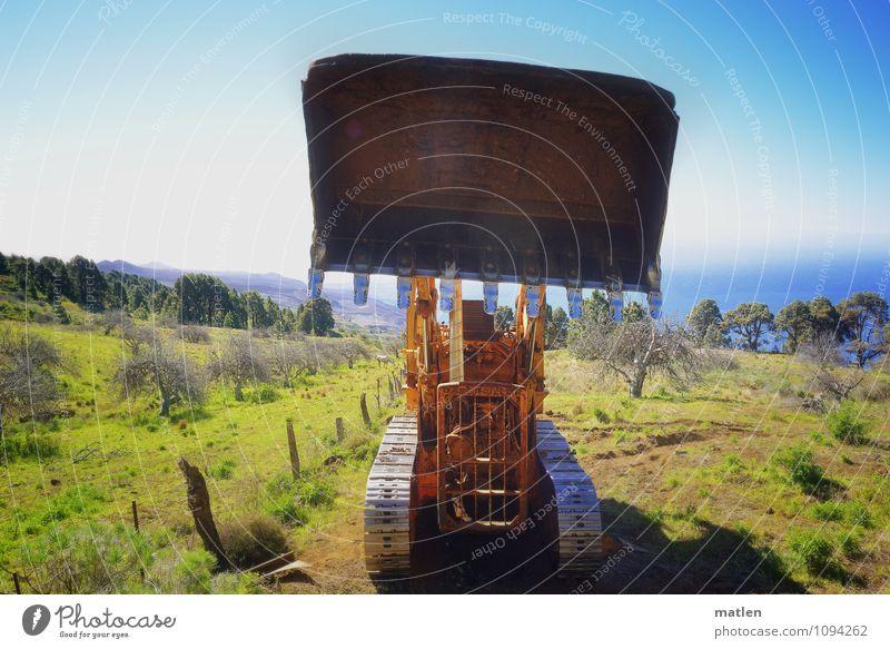 große Klappe Landschaft Pflanze Himmel Wolkenloser Himmel Horizont Sonne Frühling Wetter Schönes Wetter Baum Gras Feld Berge u. Gebirge Meer bedrohlich blau