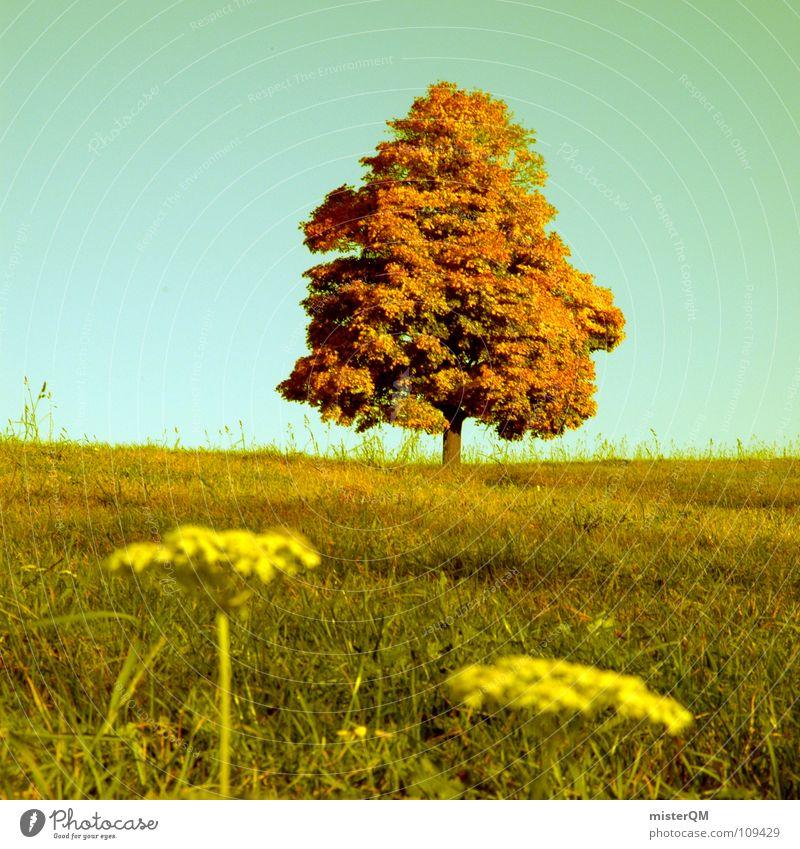autumnal arts Herbst grün Baum Horizont Hälfte 50 Blume Vordergrund Hintergrundbild Wiese Blüte schön Erholung diffus Deutschland Gras Feld Tabak verrückt ruhig