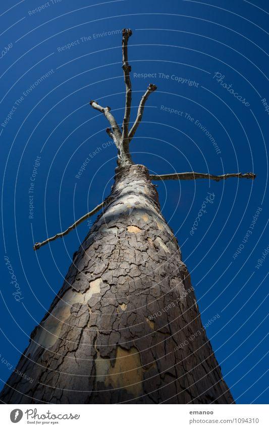 fünf Finger Natur Pflanze Luft Himmel Wolkenloser Himmel Sonne Winter Klima Wetter Baum Garten Park Wald Wachstum alt außergewöhnlich kaputt Krankheit verrückt