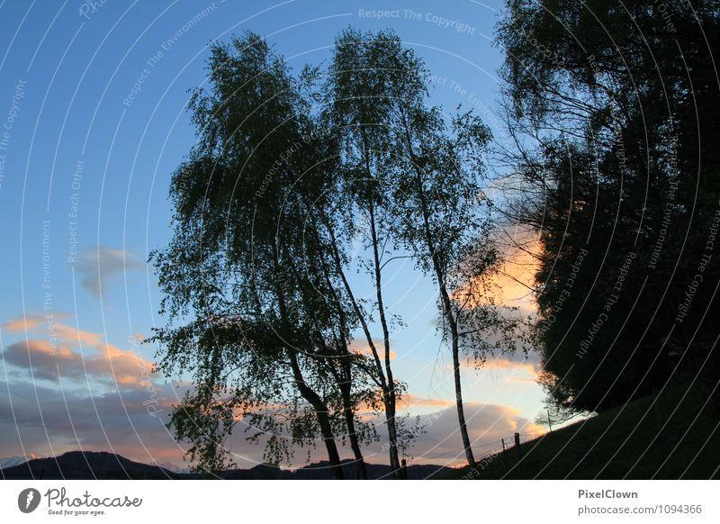 Abendstimmung Himmel Natur Ferien & Urlaub & Reisen blau Pflanze Baum Einsamkeit Landschaft ruhig Tier Wald Gefühle Holz Lifestyle Stimmung Tourismus