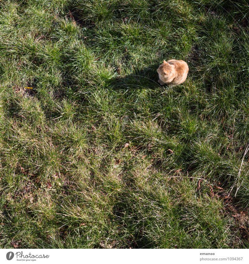 Gartentiger Gras Park Wiese Feld Tier Haustier Katze 1 Jagd Blick sitzen warten kuschlig Neugier beobachten Hauskatze schleichen Farbfoto Gedeckte Farben