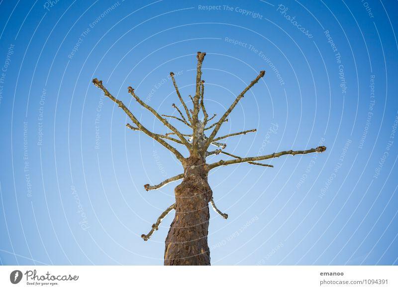 Baum im Himmel Umwelt Natur Pflanze Luft Frühling Wetter Wachstum gruselig hässlich hoch einzigartig Krankheit lustig blau bizarr laublos Ast Baumrinde