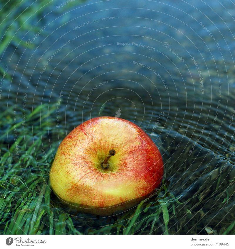 angespült rot grün lecker Ernährung feucht Flüssigkeit Gras Am Rand Halm Lebensmittel süß Frucht Apfel Wasser blau Teile u. Stücke Küste Fluss Stengel Natur Wut