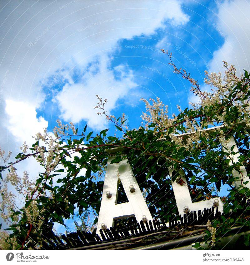 wildwuchs zwei Himmel Sonne grün blau Pflanze Blatt Wolken Blüte Schriftzeichen Buchstaben Zeichen Typographie Dachrinne