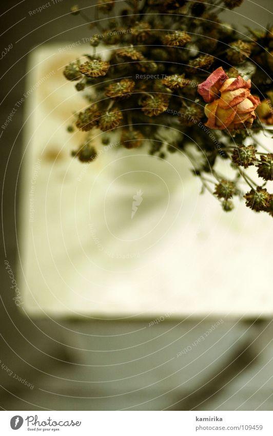 strockentrauß Natur Pflanze schön Blume Blatt Leben Traurigkeit Innenarchitektur Herbst Tod Dekoration & Verzierung Trauer Vergangenheit Sehnsucht Rose