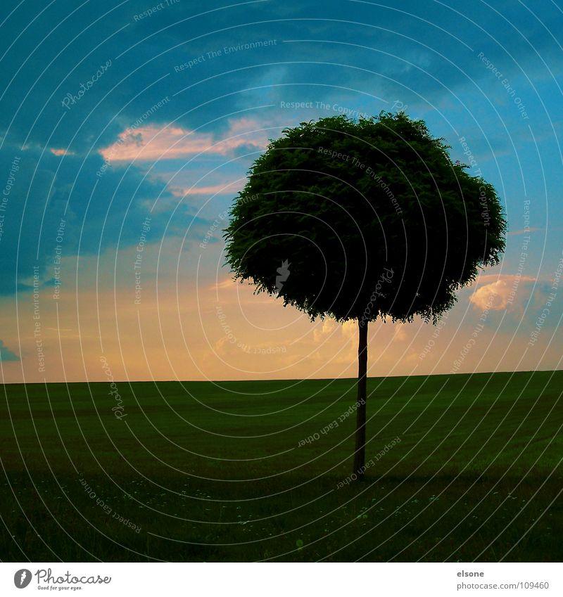 ::POESIE:: Himmel Natur blau grün Sommer Baum Blume Einsamkeit Blatt ruhig Ferne Gefühle Wiese Gras natürlich Gesundheit