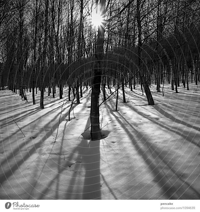 stillgestanden Natur Landschaft Urelemente Winter Schönes Wetter Eis Frost Schnee Wald ästhetisch Partnerschaft Einsamkeit Idylle Schattenspiel ruhig stehen