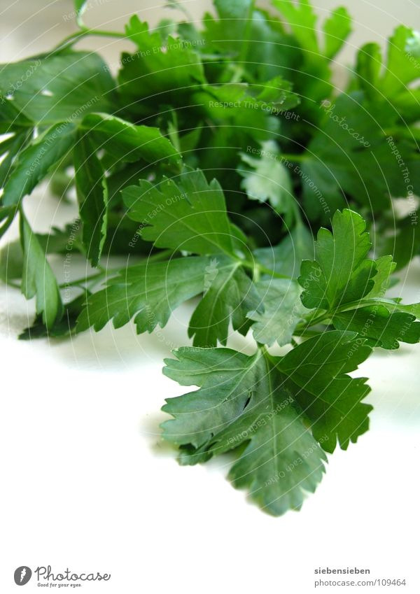 Zutat Petersilie Kräuter & Gewürze kochen & garen Ernährung Küche Gesundheit verfeinern Pflanze frisch Kräutergarten Lebensmittel Gastronomie Haushalt Gemüse