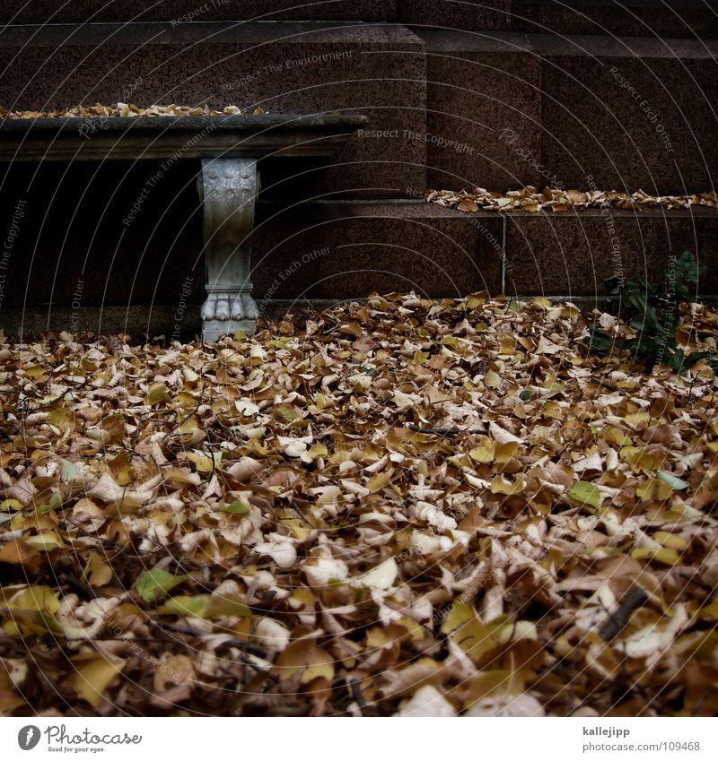 vergänglichkeit alt Einsamkeit Blatt ruhig kalt Leben Herbst Stein braun maskulin Park Vergänglichkeit Frost Vergangenheit Symbole & Metaphern Bank