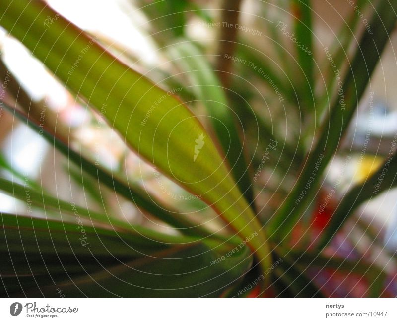 Jungle Natur grün Pflanze Zimmerpflanze