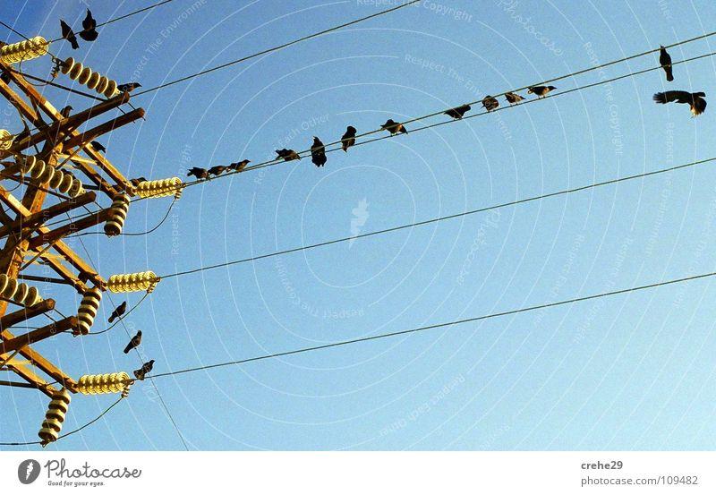 ENERGY GROUP Natur schön Himmel blau kalt Vogel hoch Energiewirtschaft Elektrizität Macht Kabel Klarheit Strommast Krähe