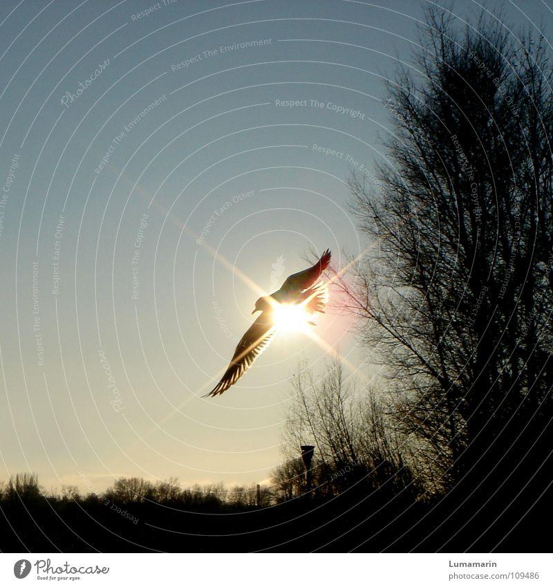 Blender Himmel weiß Baum Sonne blau schwarz gelb Lampe grau Wärme hell Beleuchtung Vogel glänzend fliegen Luftverkehr