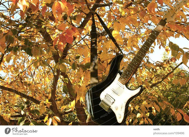 Chillen im Baum ruhig Blatt Erholung Herbst Musik Konzert Rockmusik Gitarre