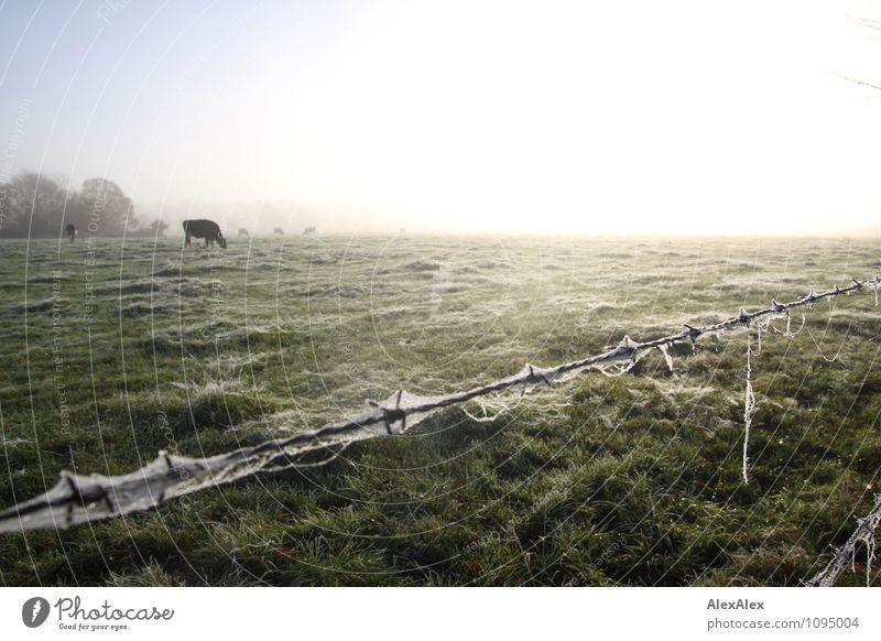 eingezäunt Natur Pflanze Baum Landschaft Tier Ferne Umwelt Leben Wiese Gras natürlich Horizont Feld Idylle Nebel frisch