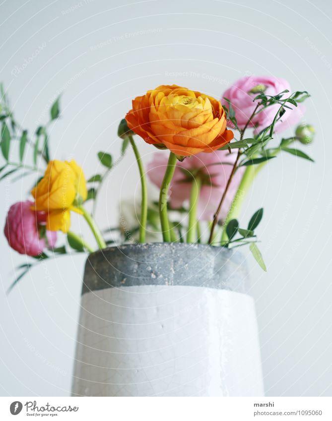 Ranunkel Ranunkel Natur Pflanze Blume Stimmung Blüte Vase Dekoration & Verzierung Blühend Frühlingsgefühle Frühlingsblume orange rosa schön Blumenstrauß