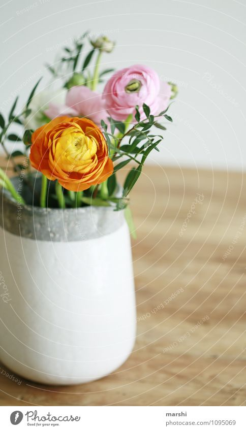 Ranukelstrauß Pflanze schön Blatt Frühling Blüte Stimmung orange Dekoration & Verzierung Blumenstrauß Ranunkel