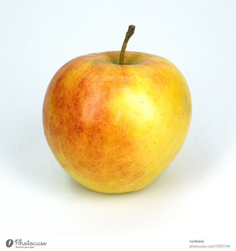 Apfel, Elstar Frucht Natur Pflanze Baum frei weiß domestica Apfelbaum Fruchtkoerper Einzelfrucht essbar Heilpflanzen Nutzpflanze Obstgehoelz Kernobst