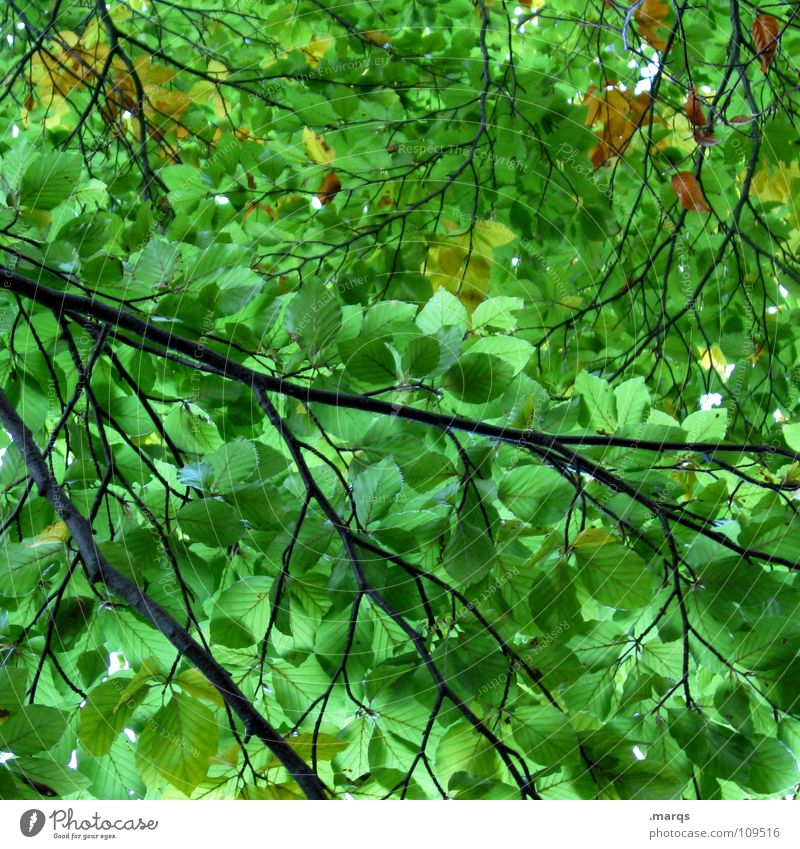 Impermeable Blatt grün hellgrün Wald geschlossen Wachstum saftig Kraft Baum Photosynthese Pflanze Botanik Unterholz Holzmehl Natur Jahreszeiten Ast Zweig