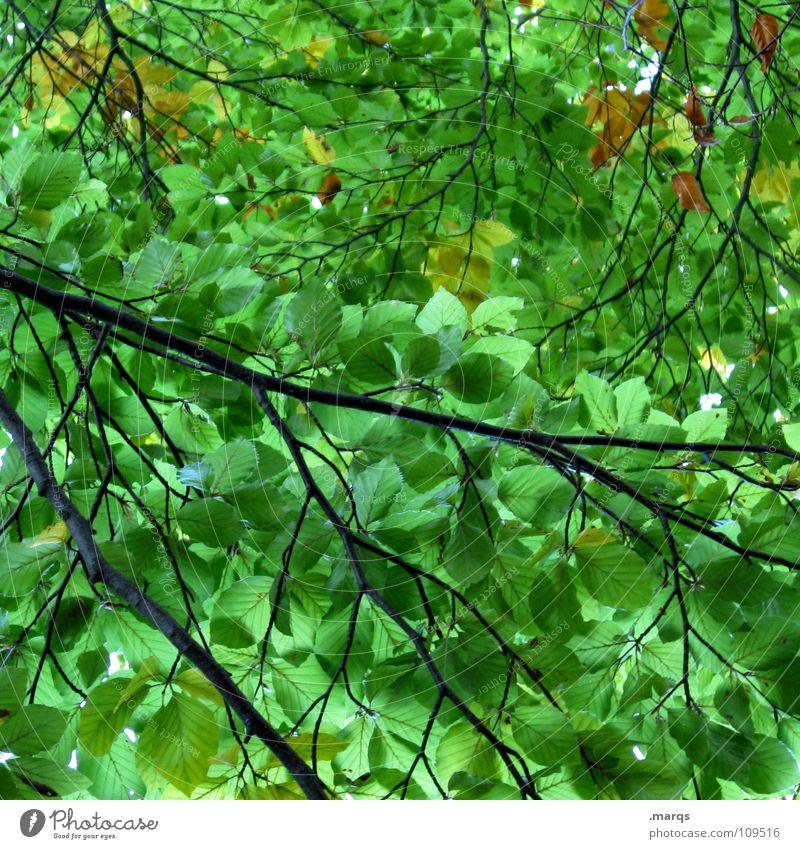 Impermeable Natur Baum grün Pflanze Blatt Wald Leben Kraft Kraft geschlossen Wachstum fallen Ast Jahreszeiten Botanik Zweig