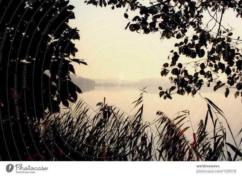 See am Morgen Natur Wasser Baum Sommer Ferien & Urlaub & Reisen Herbst Traurigkeit Nebel Romantik Schilfrohr Angeln Dunst Morgennebel